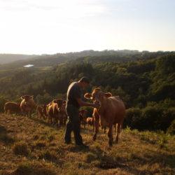 Gilbert et une vache limousine